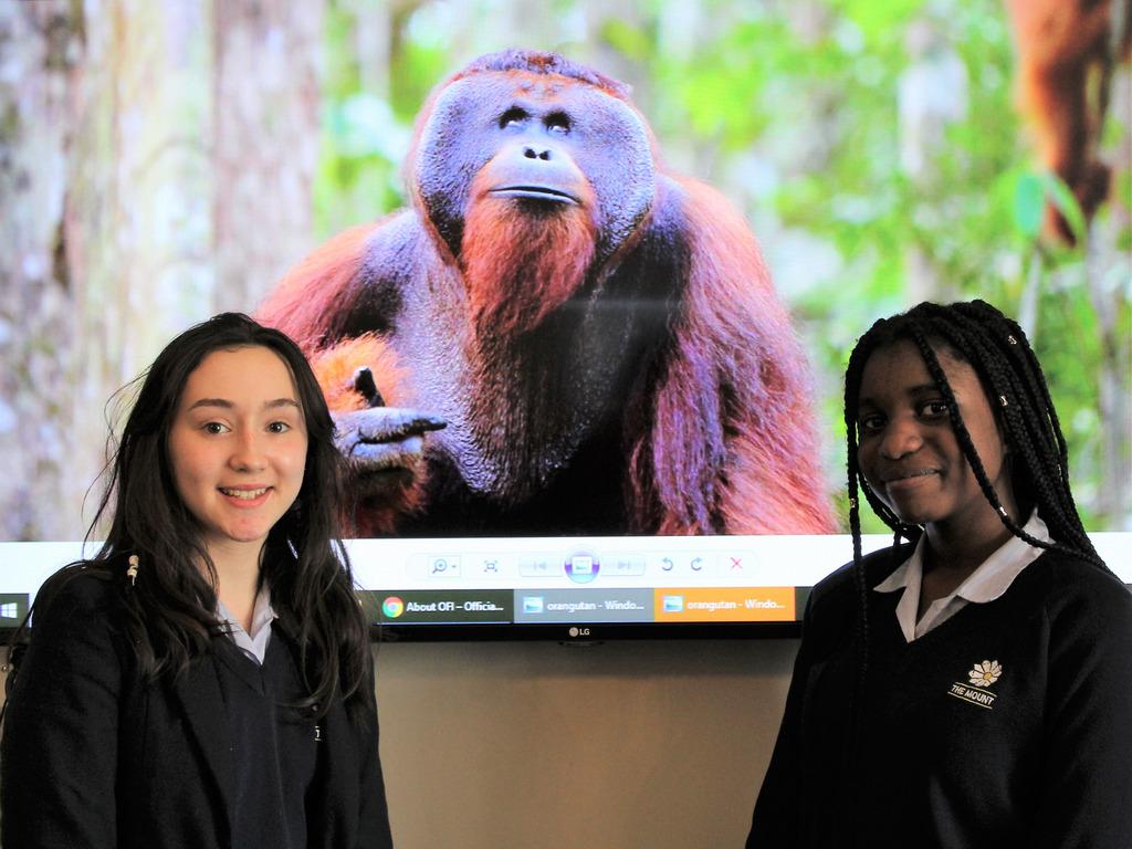 The Mount Celebrates 50 Years of Orangutan Conservation with Dr Biruté Galdikas